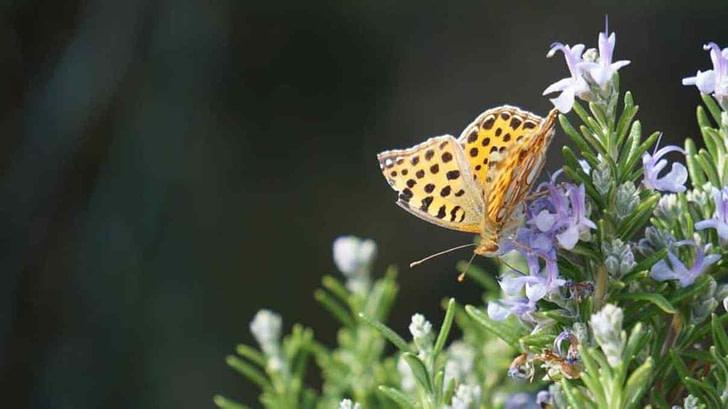 Der stolze Schmetterling und die Raupe