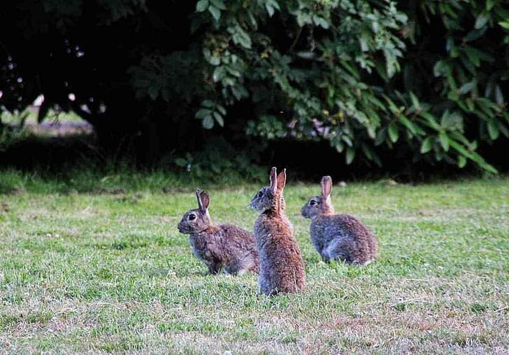 Die Kaninchen sind schuld